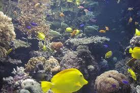 5 Ways to Make Learning Fun at the Aquarium