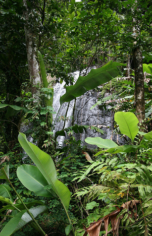 puerto rico waterfall