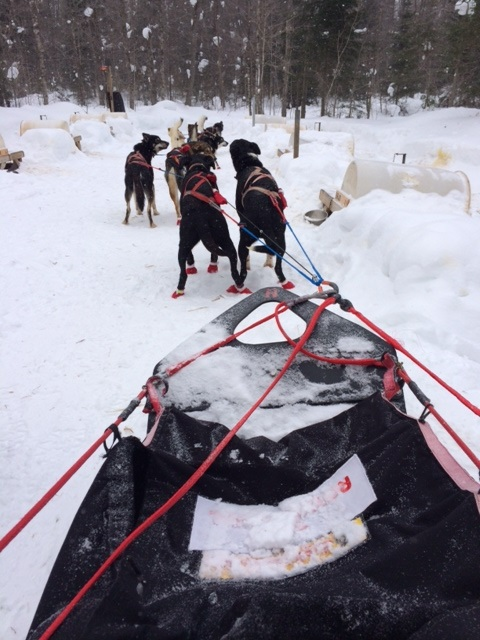 Go Dog Sledding.