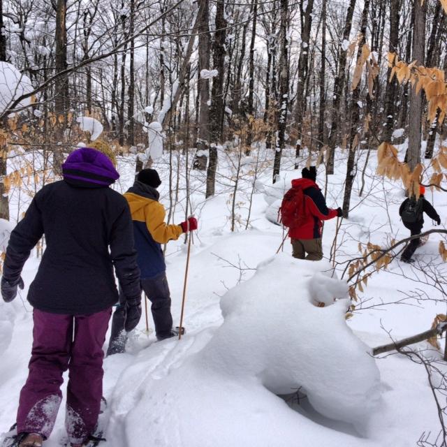 Explore Tahquamenon State Falls Park on Snowshoes.