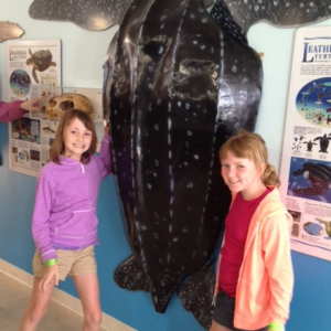 Exploring the Turtle Hospital in Marathon, FL