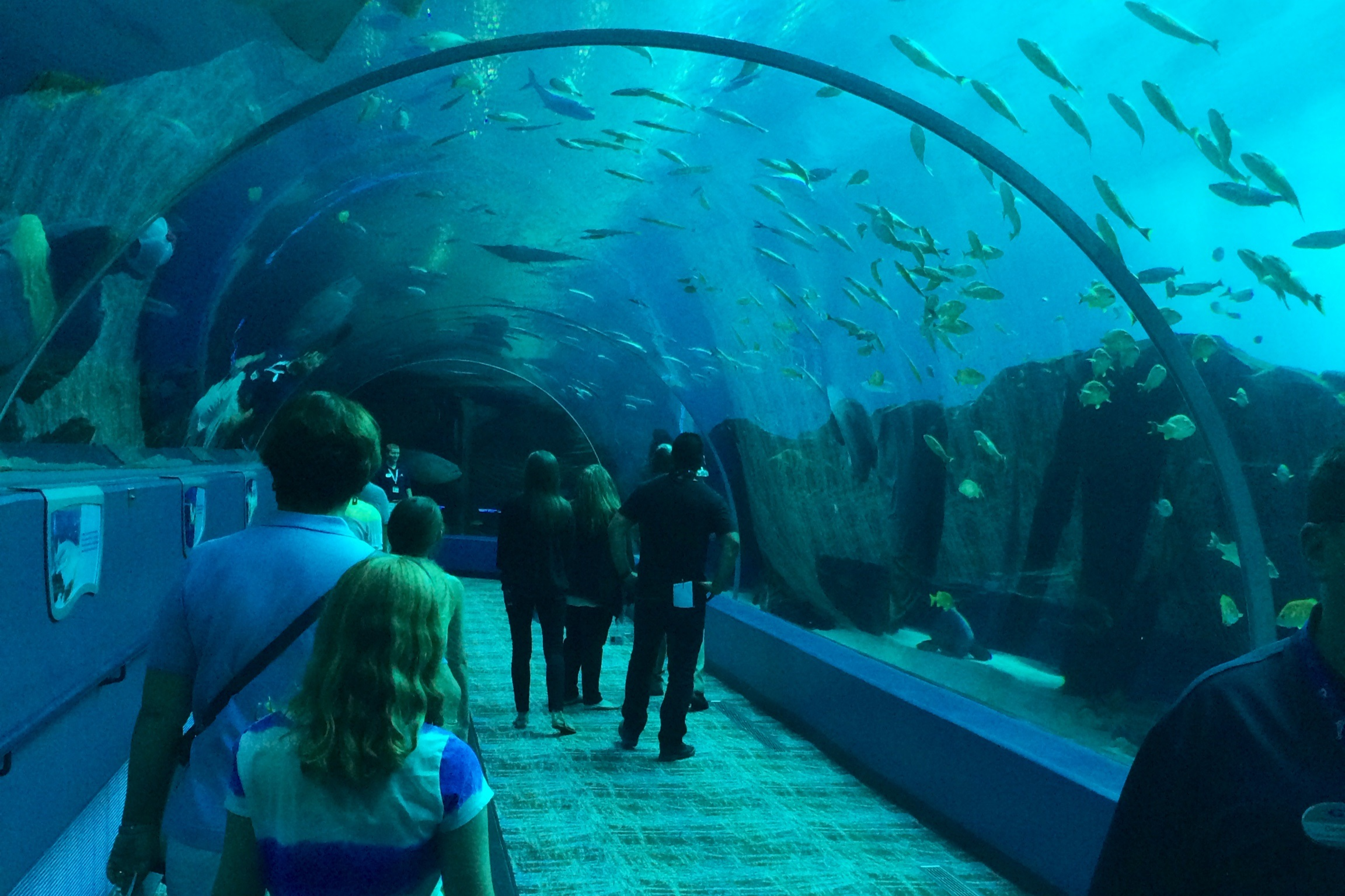 Three days in atlanta with kids things to do Aquarium in georgia