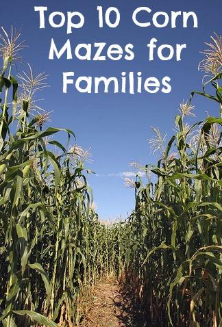 corn maze tall