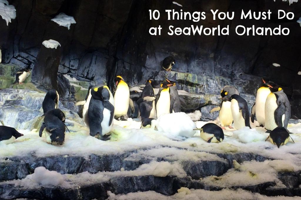 penguins-seaworld orlando