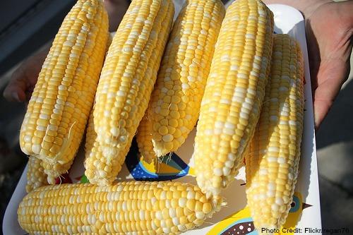 Iowa-Sweet Corn