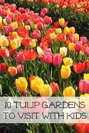 tulips-vertical