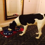 Hotel for Dogs: An Overnight Stay at Kimpton's Hotel Monaco