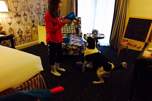 Fife getting all set up in our room at Hotel Monaco.
