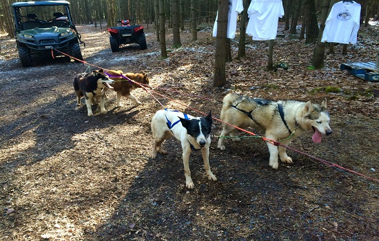 Dog Sledding with Kids in the Poconos (When There's No Snow)
