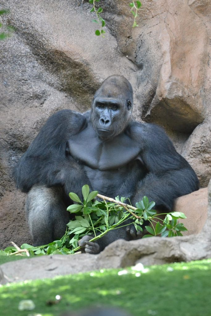Top 10 Zoos to Visit this Summer