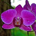 Spring Break: A Botanical Garden + Free Admission for You