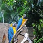 Spring Break: Birds, Bears, and Yes, Mayan Ruins, at the Palm Beach Zoo