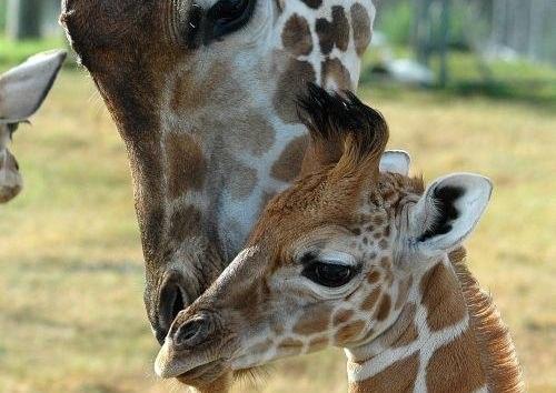 Spring Break: More Wild Animals at Lion Country Safari