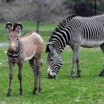 Baby Boom: 10 Zoos Welcoming Baby Animals