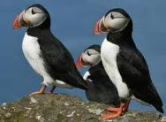 Best Family Boat Trips: Puffins, Whales & Manatees (No Water Slides)