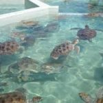 6 Ways to Get Up Close with Sea Turtles