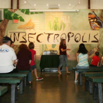 Get Buggy: 8 Museums to Learn All About Insects