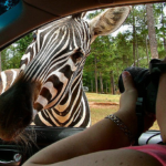 7 Places to Go on an Animal Safari Close to Home
