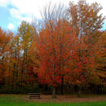 4 Ways to Keep Up with the Fall Foliage Frenzy