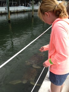Kate Feeding the Sea Turtles