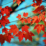 Best Fall Foliage Family Drives