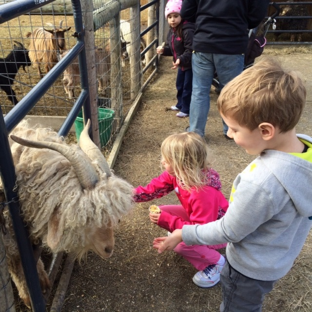 Feed the Animals at the Petting Farm
