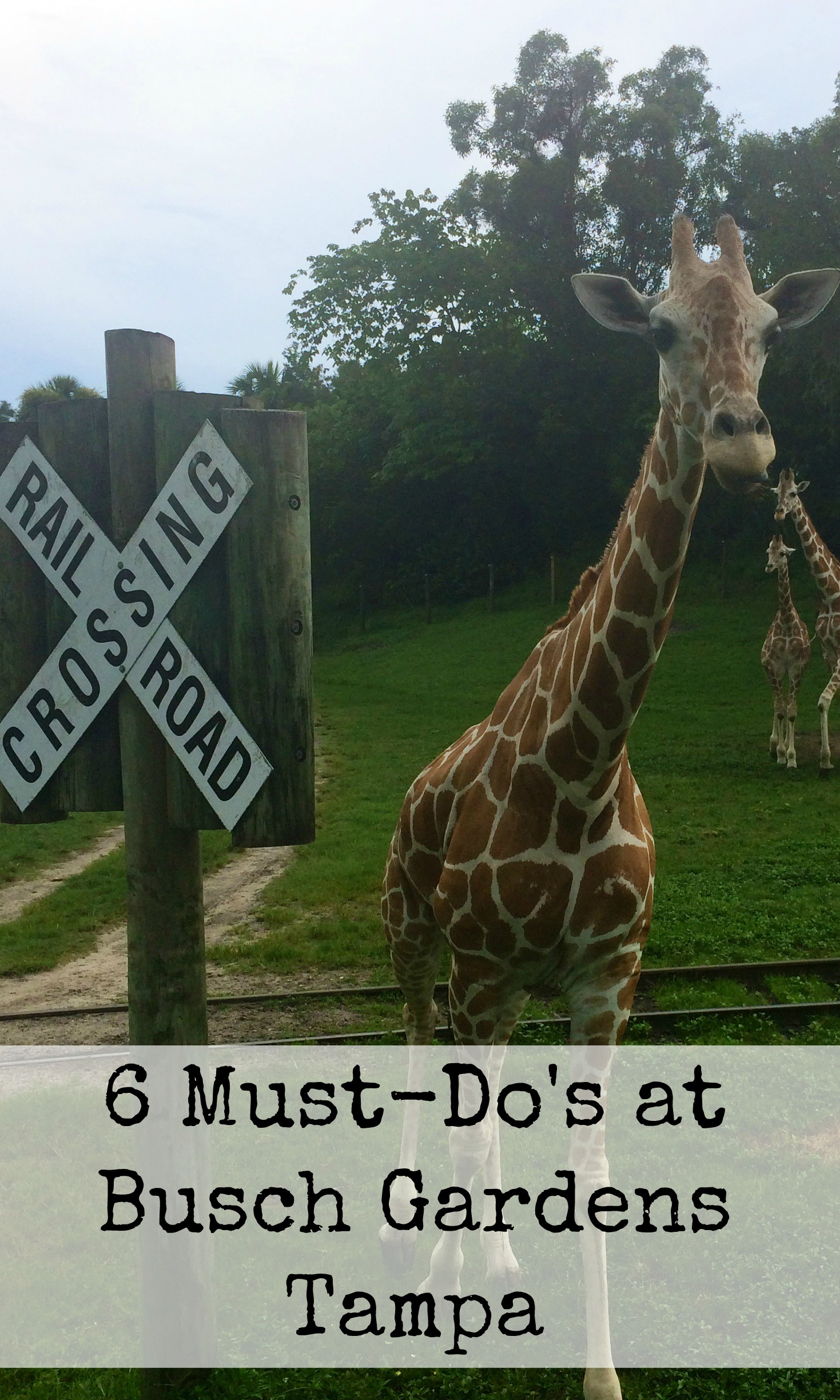 6 Things To Do At Busch Gardens Tampa Kidventurous