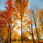 Fall Foliage: 8 Fun Leaf Peeping Adventures