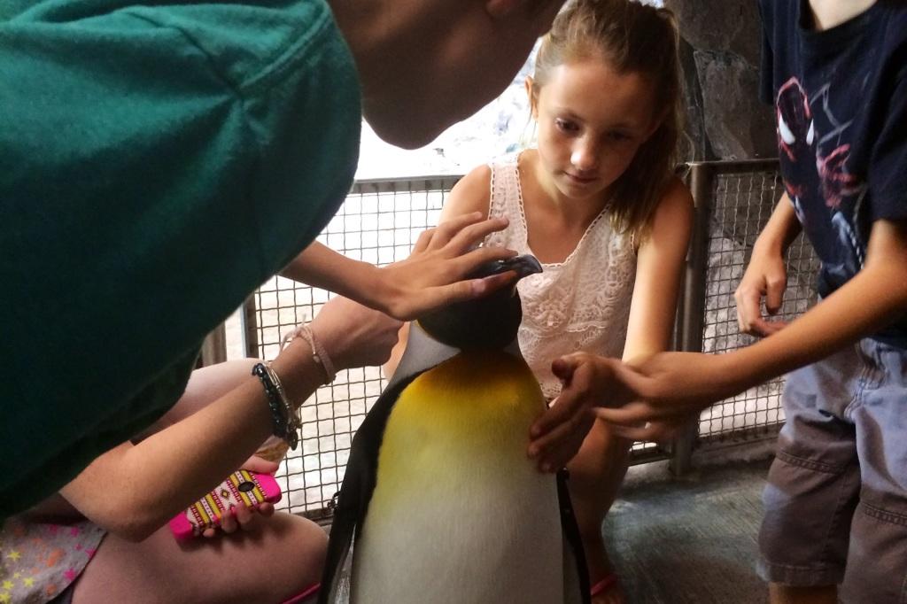 10 Things You Must Do at SeaWorld Orlando