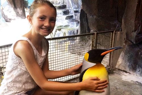clare-seaworld-penguin