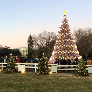 national christmas tree-square