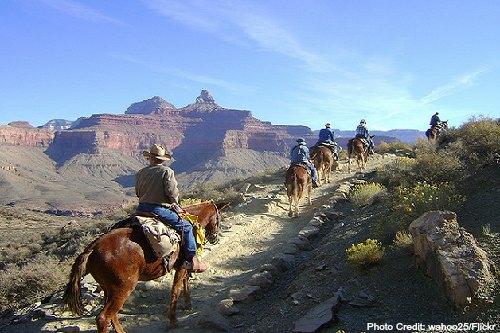 mule trip - grand canyon
