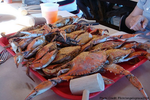 Maryland-Blue Crabs