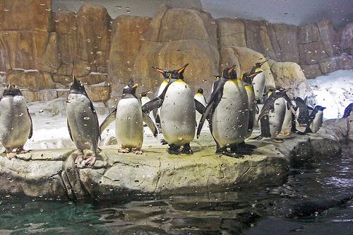henry doorly zoo penguins