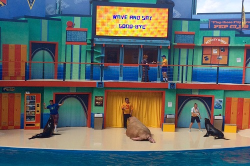 We loved the new Clyde & Seamore's Sea Lion High show.