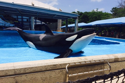 15 Things You Must Do at SeaWorld San Antonio