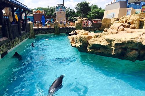 seaworld sea lions